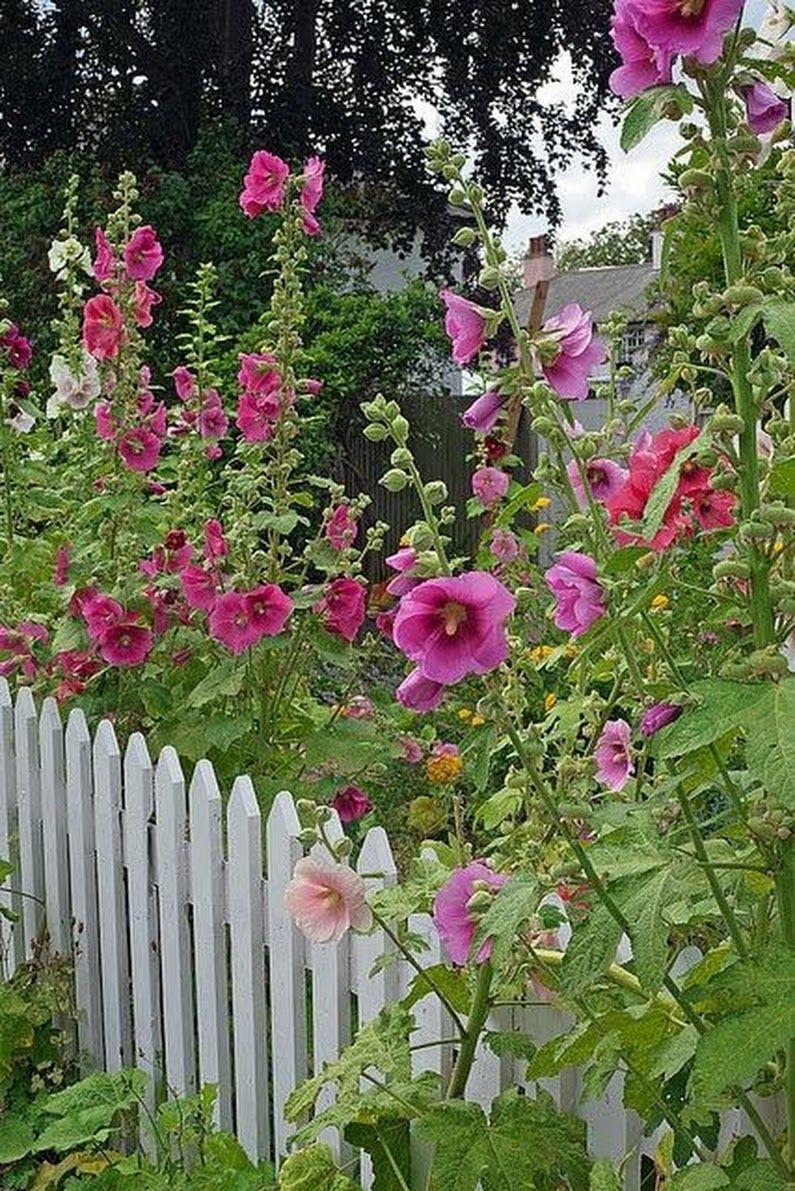 Pin de Mar Pinheiros em cumita. | Rosas trepadeiras, Jardim inglês, Portas  de jardim