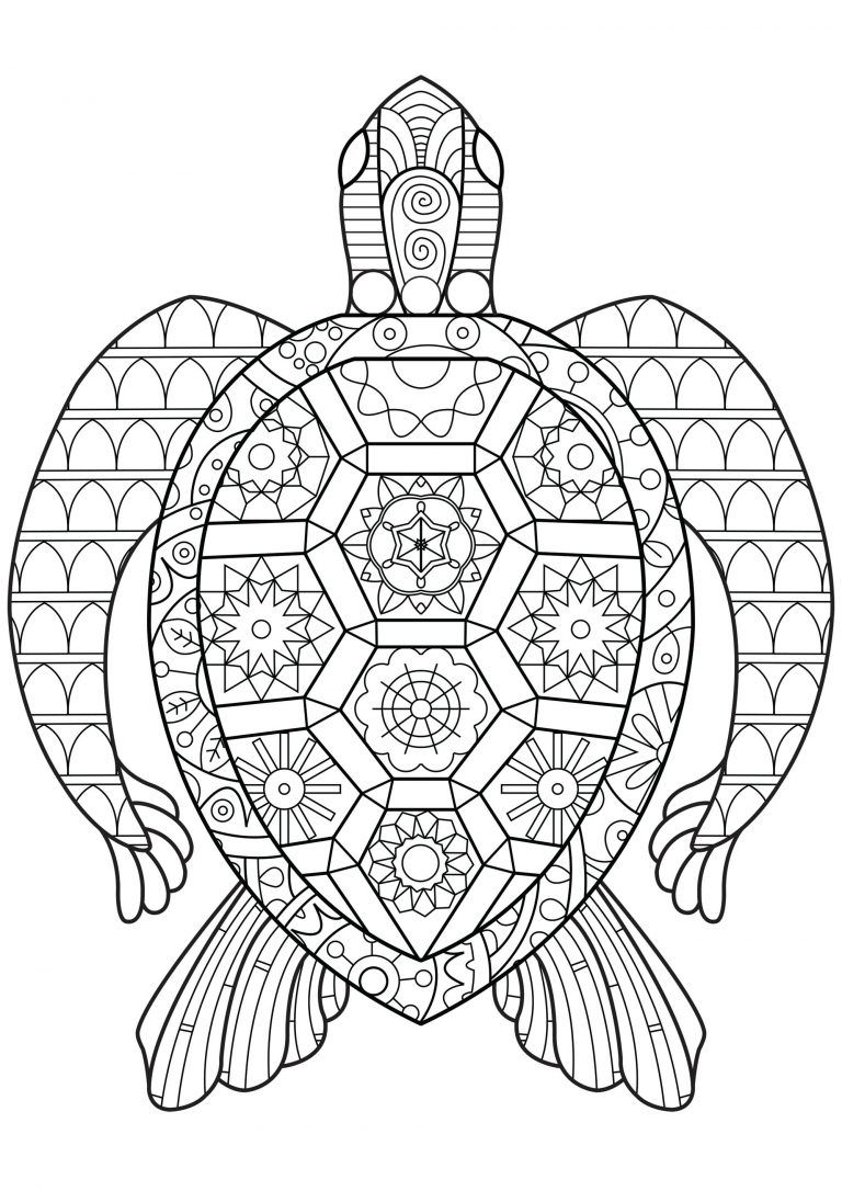 Reptile Coloring Pages Best Coloring Pages For Kids Turtle Coloring Pages Abstract Coloring Pages Animal Coloring Pages