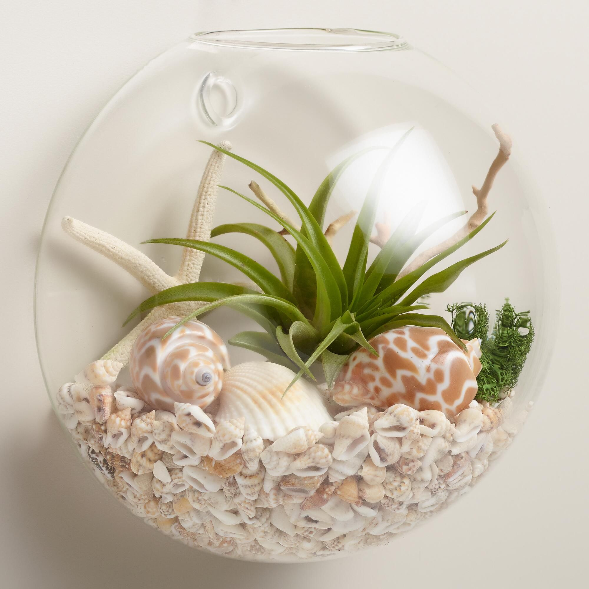 Fix our terrarium to your wall to refresh the look and atmosphere cost plus world market wall mounted live plant glass terrarium reviewsmspy