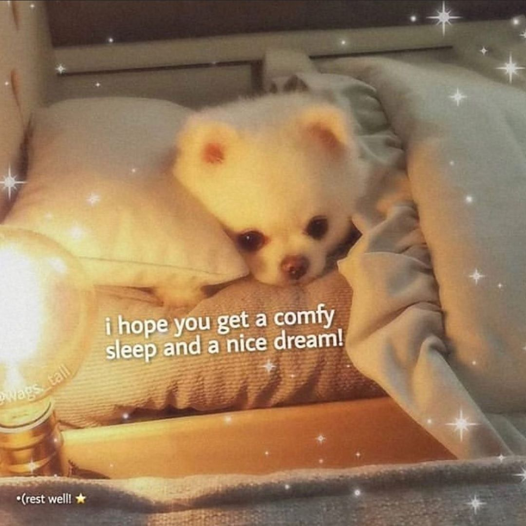 Wholesome On Instagram Goodnight Ily Wholesome Wholesomememes Wholesomeness Wholesomem Cute Memes Cute Love Memes Sweet Memes