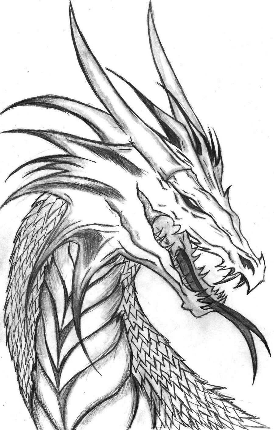 Dragon Sketches In Pencil
