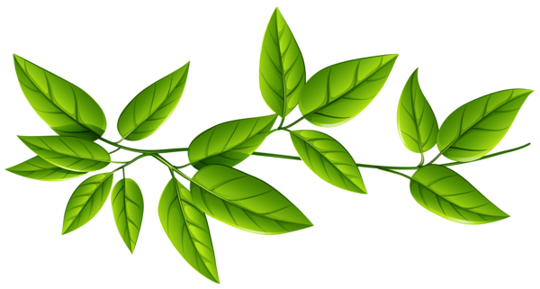 Free Download Leaves Group Line Transparent Png Image Green Leaf Background Leaves Digital Flowers