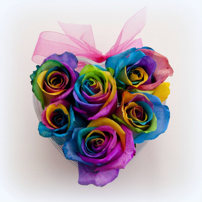 Rainbow roses home buy rainbow roses rainbow rose buds for Where can i buy rainbow roses