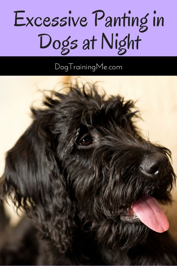 Excessive Panting in Dogs at Night Dog pants, Dog health