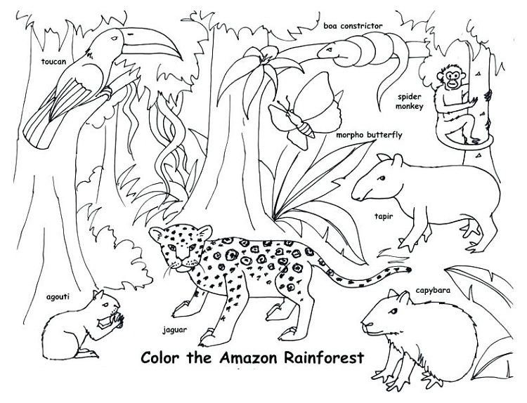 animal habitat coloring pages coloring pages for kids di 2019. Black Bedroom Furniture Sets. Home Design Ideas