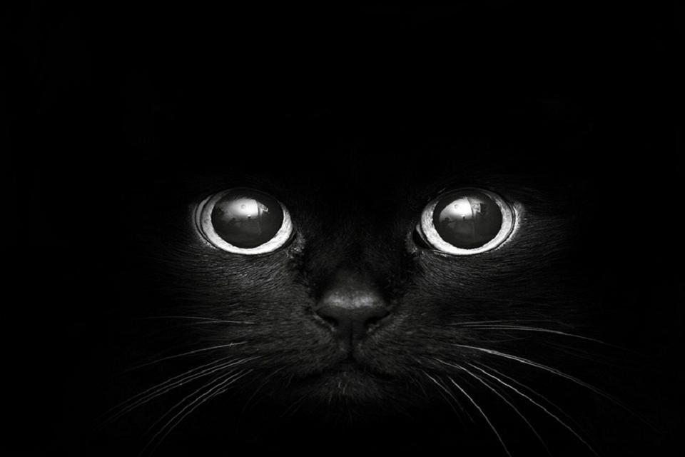 Cat Hd Black And White Wallpaper Kucing Hitam Binatang Hewan Black and white wallpaper cat