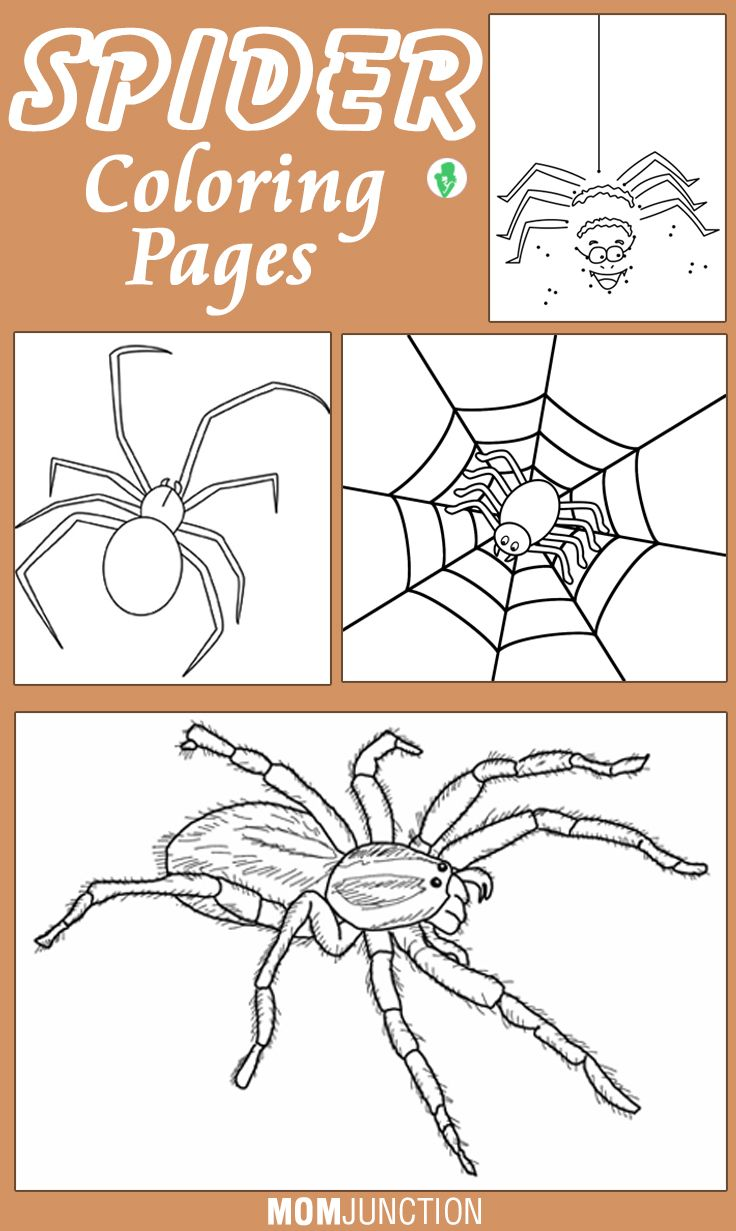 Top 10 Free Printable Spider Coloring Pages Online   Pinterest ...