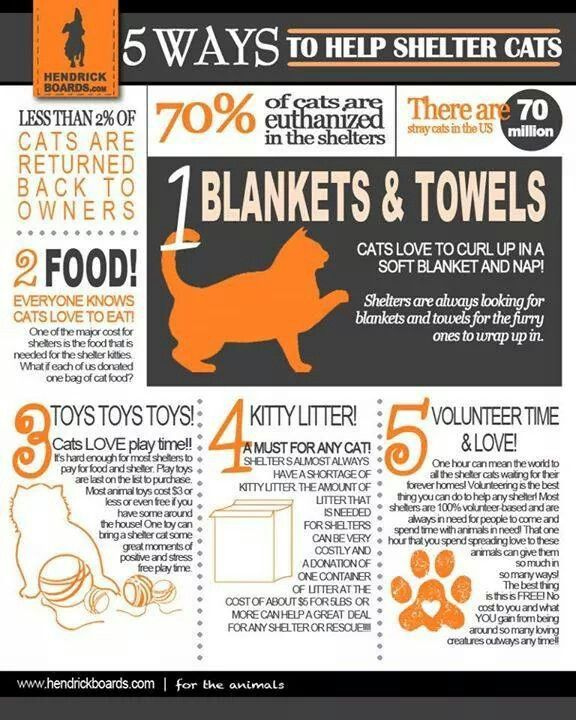 Pin By Suzanne On Save Rescue Assist All Animals Animal Shelter Donations Dog Rescue Idea Cat Shelter
