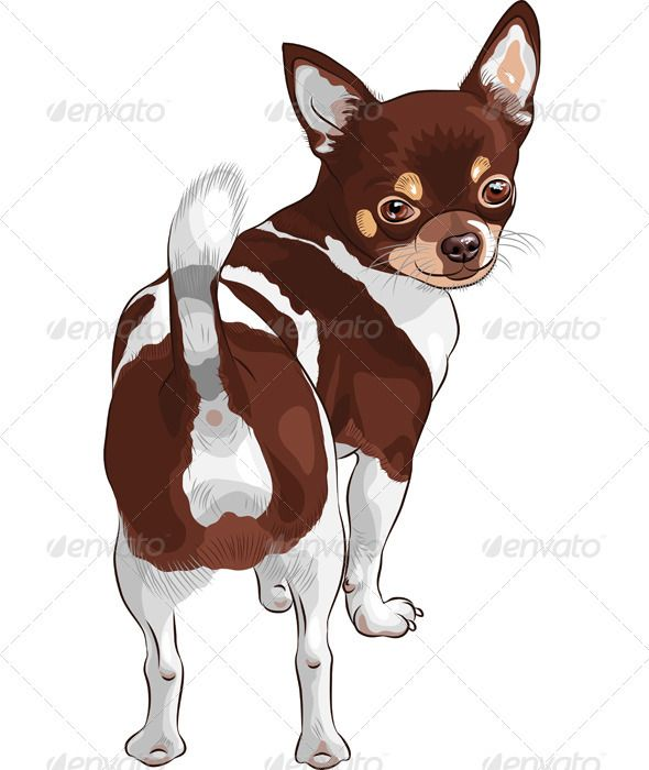 Vector Sketch Dog Chihuahua Breed Smiling | Dog sketch ...