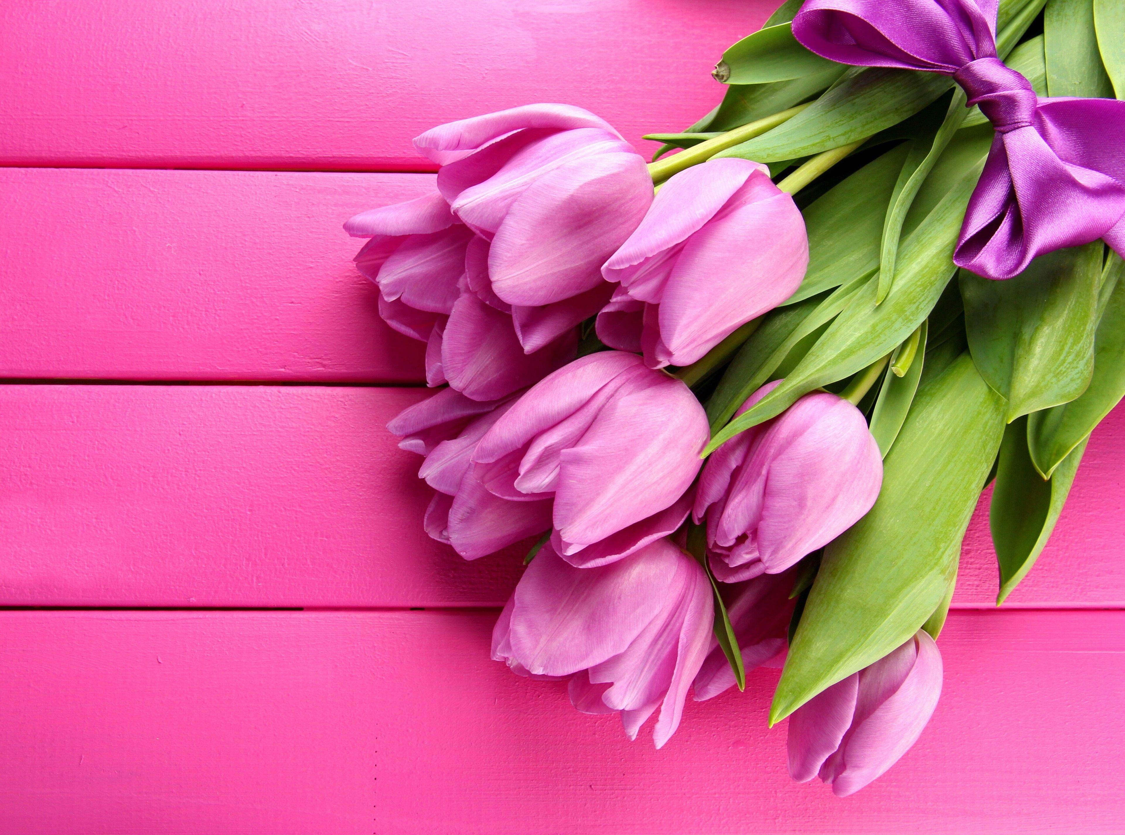 3840x2849 Tulip 4k Hd Wallpaper Image Cvety Fioletovye Tyulpany