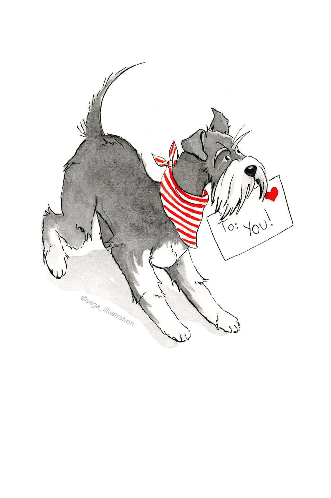 Schnauzer Christmas Illustration saga_illustration