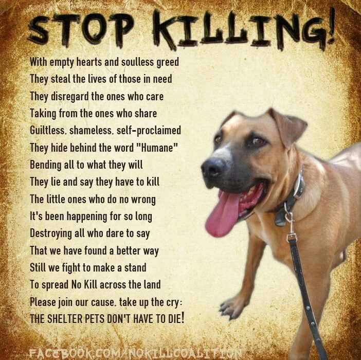 Poem No Kill Animal Shelter Dogs Animals