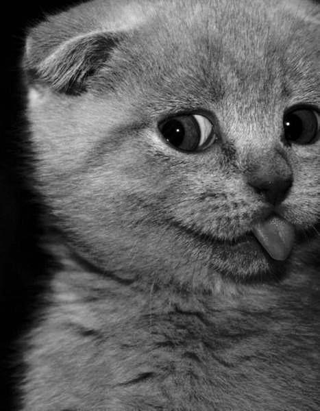 selfie. #cute #cat #animals