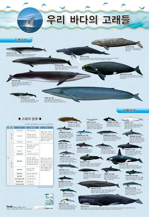 whales that we can see in korean sea.