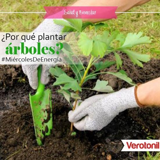 Por qu es importante plantar rboles los rboles son el for Porque son importantes los arboles wikipedia