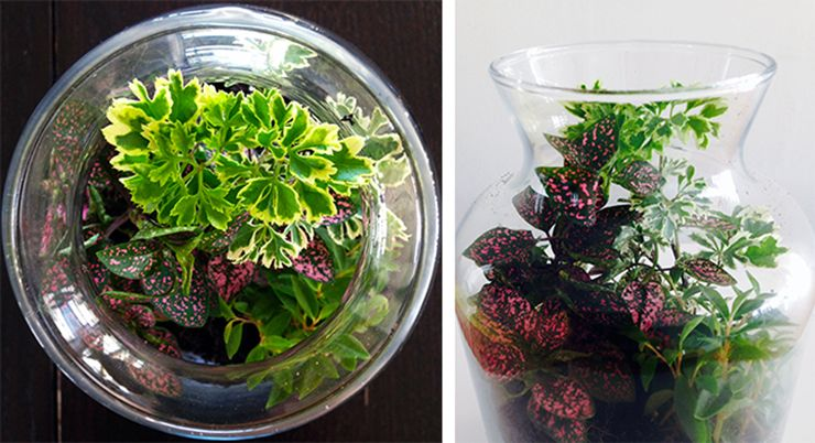 Enclosed Terrariums Tips Tricks And Inspiration Diy Crafts