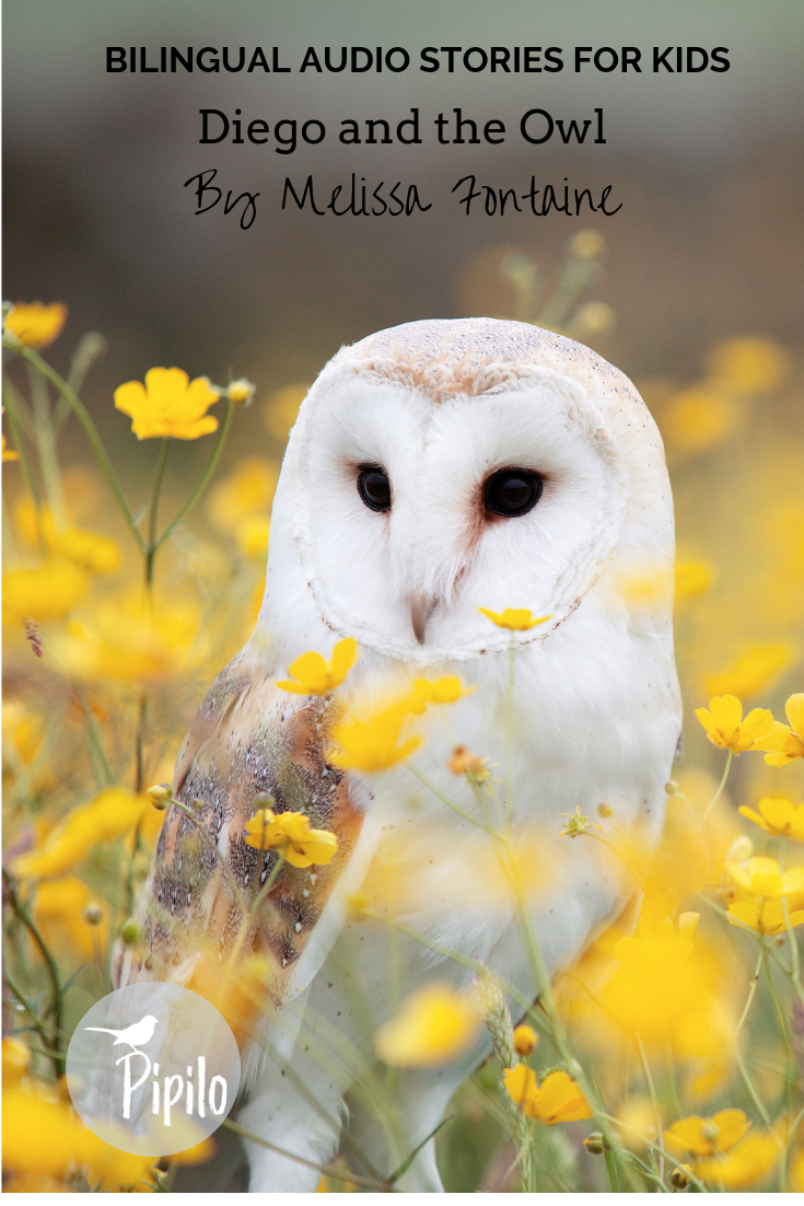 Samples of Audio Stories Owl, Owl wallpaper, Owl pictures