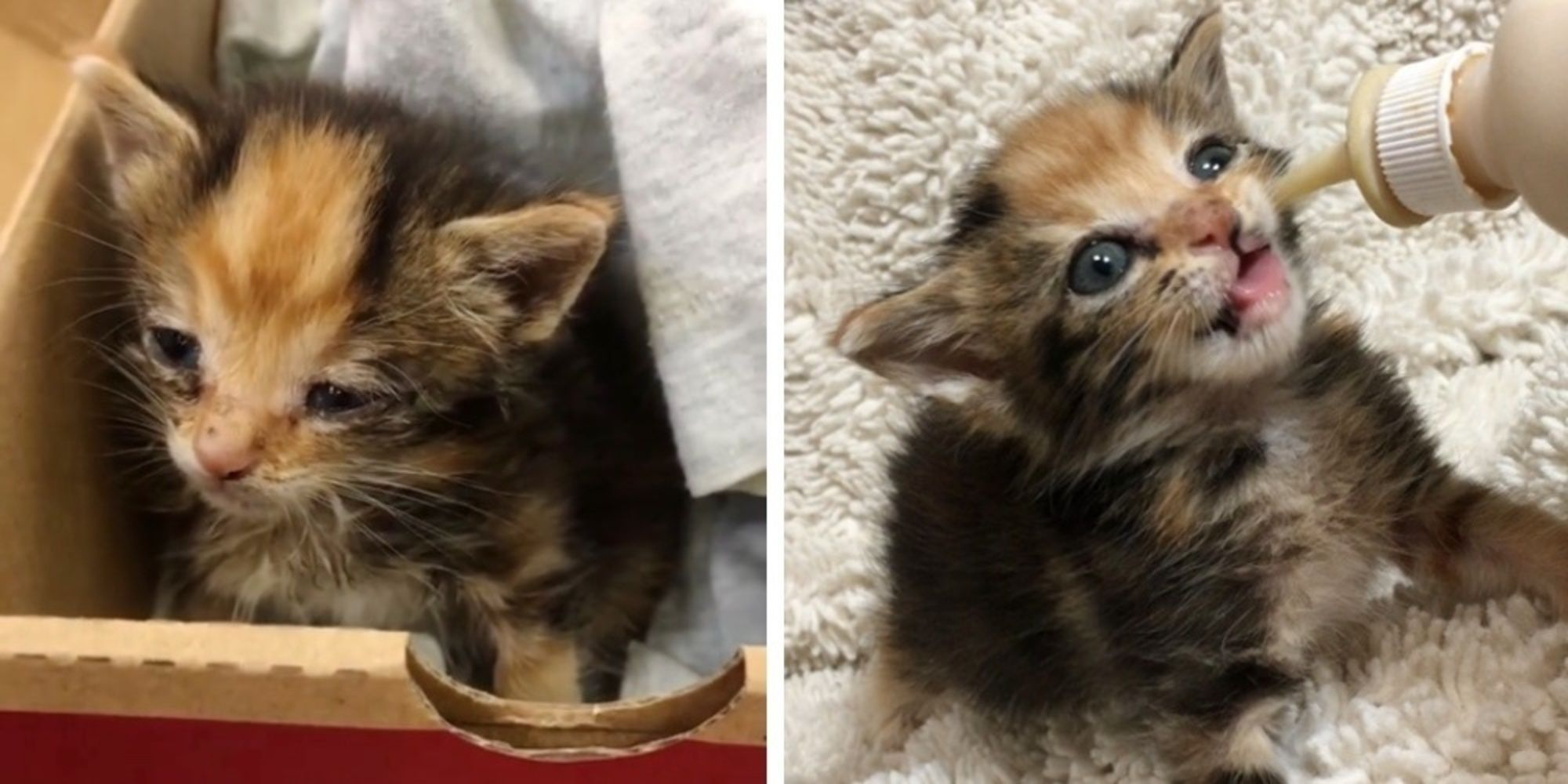 Worker Finds Calico Kitten Meowing Outside Alone and
