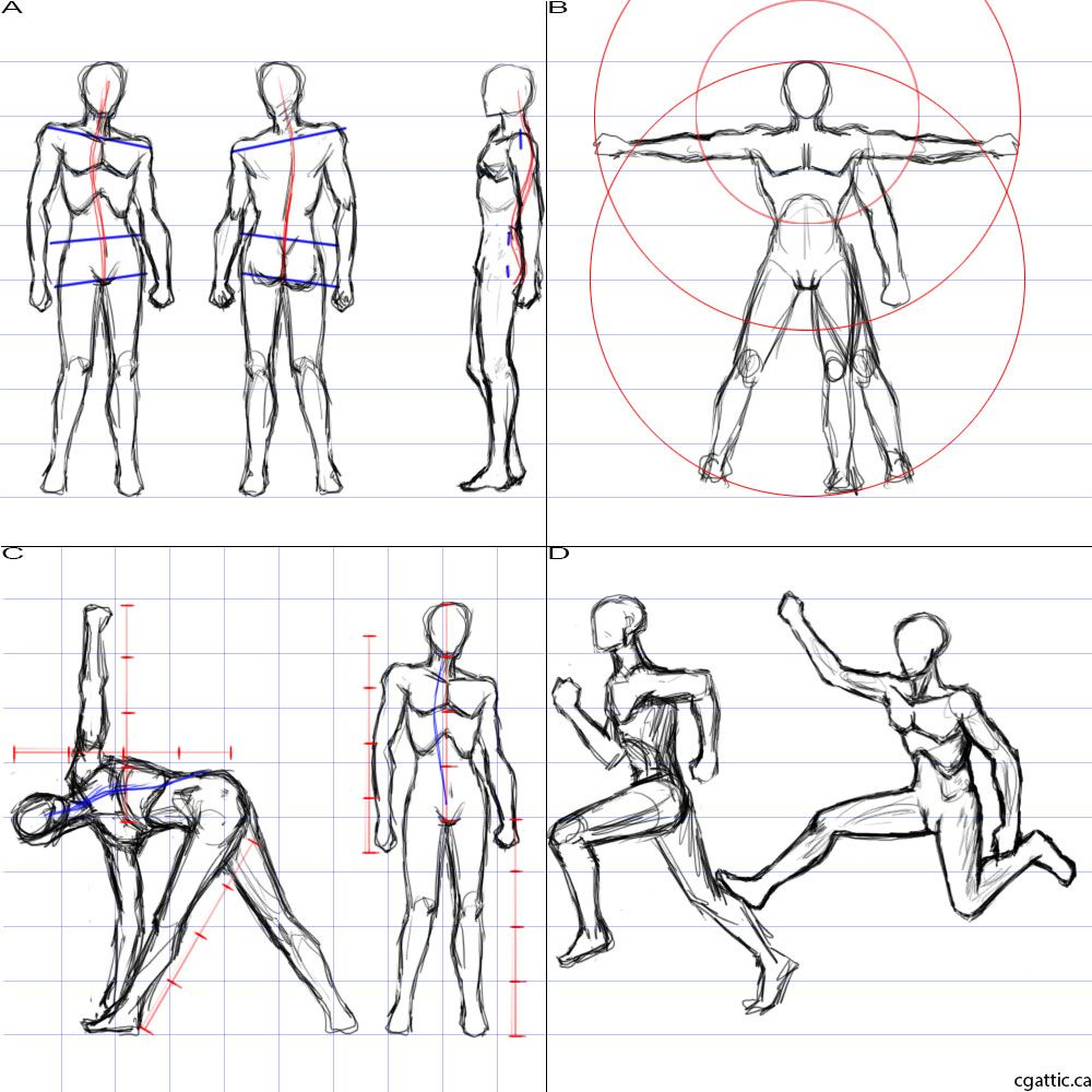 How to draw a person the proportions the entire body can be measured using the head the idea is to create a simple mannequin that will house all the