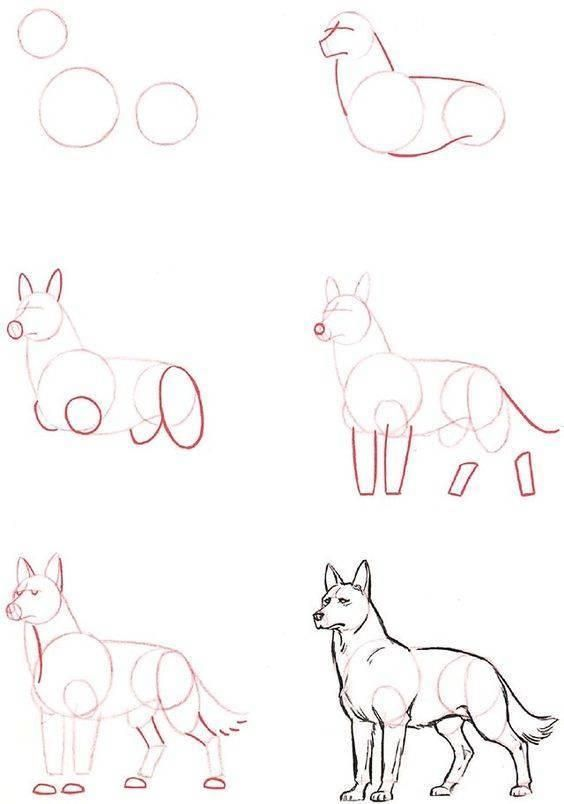 Photo of how to draw pets 2 – #animals #like #drawing #drawing # domesti …
