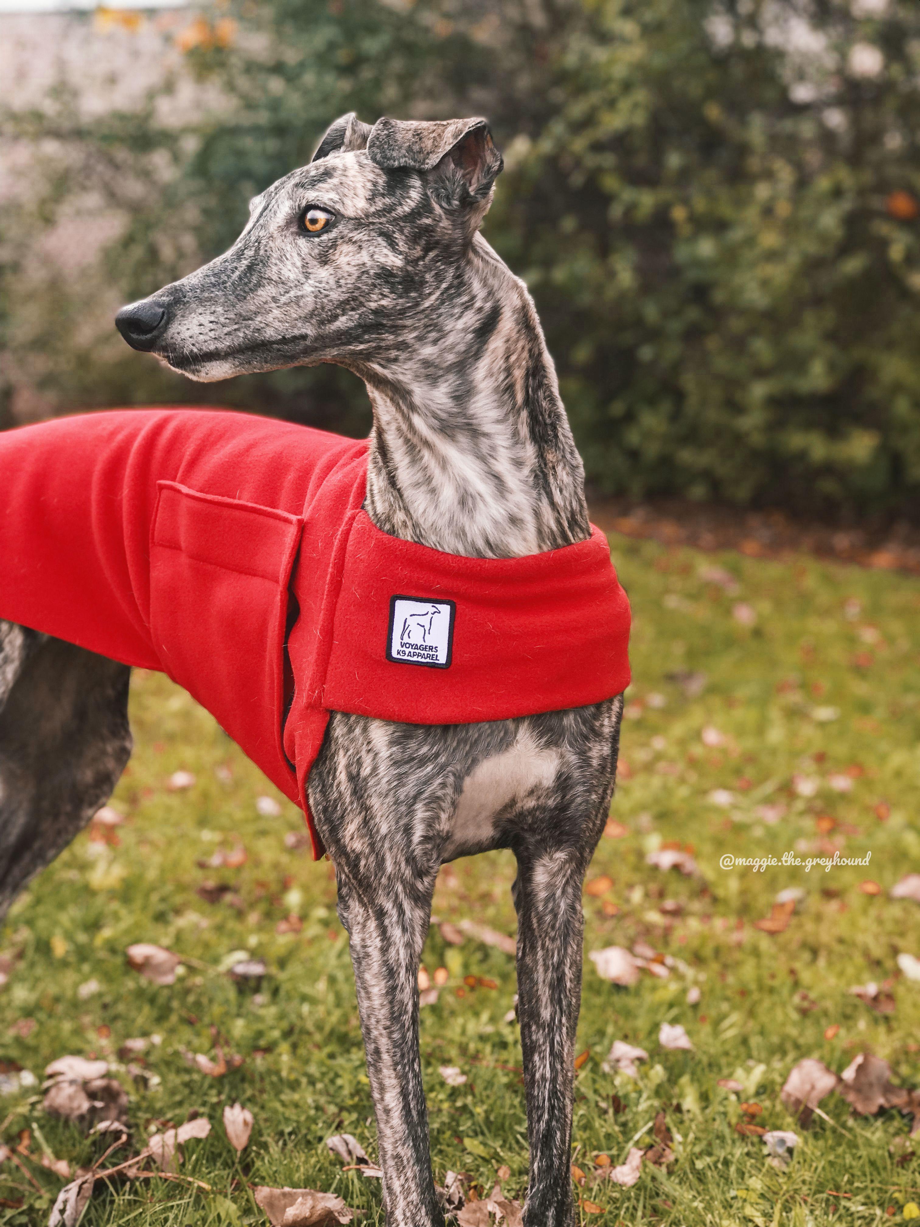 412565fbe8bdd Voyagers K9 Apparel Red Tummy Warmer Maggie the Greyhound Dog ...