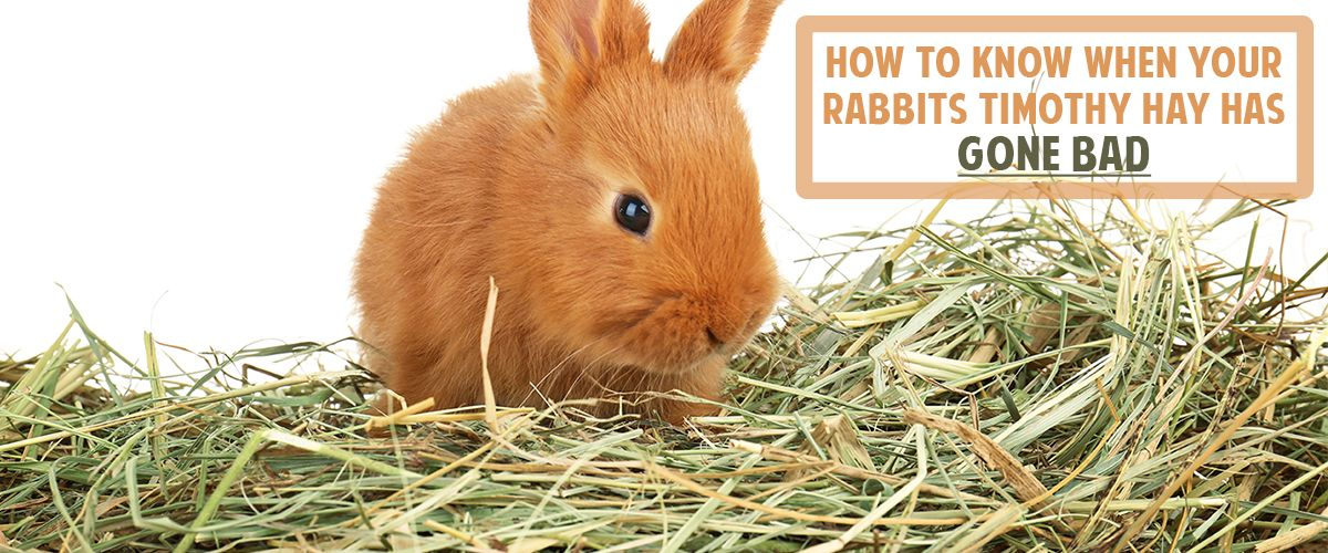 When Your Rabbit S Timothy Hay Has Gone Bad Small Pet Select Small Pets Rabbit Pets