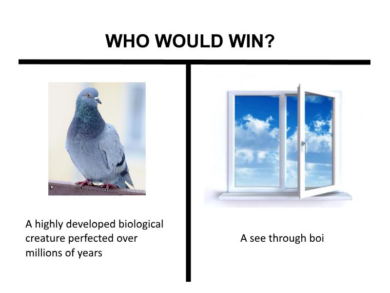 Who Would Win Memes Dark Humour Memes Funny Memes Winning Meme