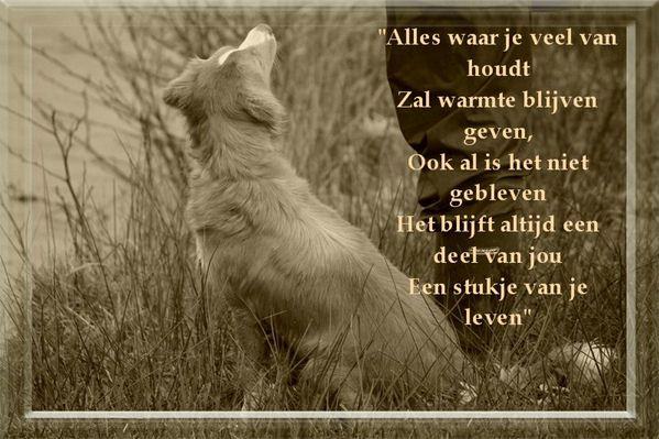 Condoleance Bij Overlijden Hond Google Zoeken Honden