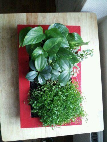 cr er un tableau v g tal en 10 tapes fleurs pour bien vivre pinterest tableau vegetal. Black Bedroom Furniture Sets. Home Design Ideas