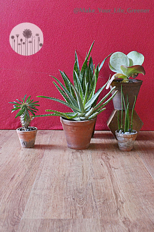 12 Roslin Doniczkowych Na Poludniowy Sloneczny Parapet Plants Planters Planter Pots