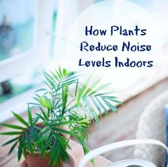 How plants reduce noise levels indoors greener on the for How to reduce noise in a room