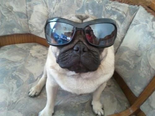 I Love Pugs Pugs I Love Dogs Glasses