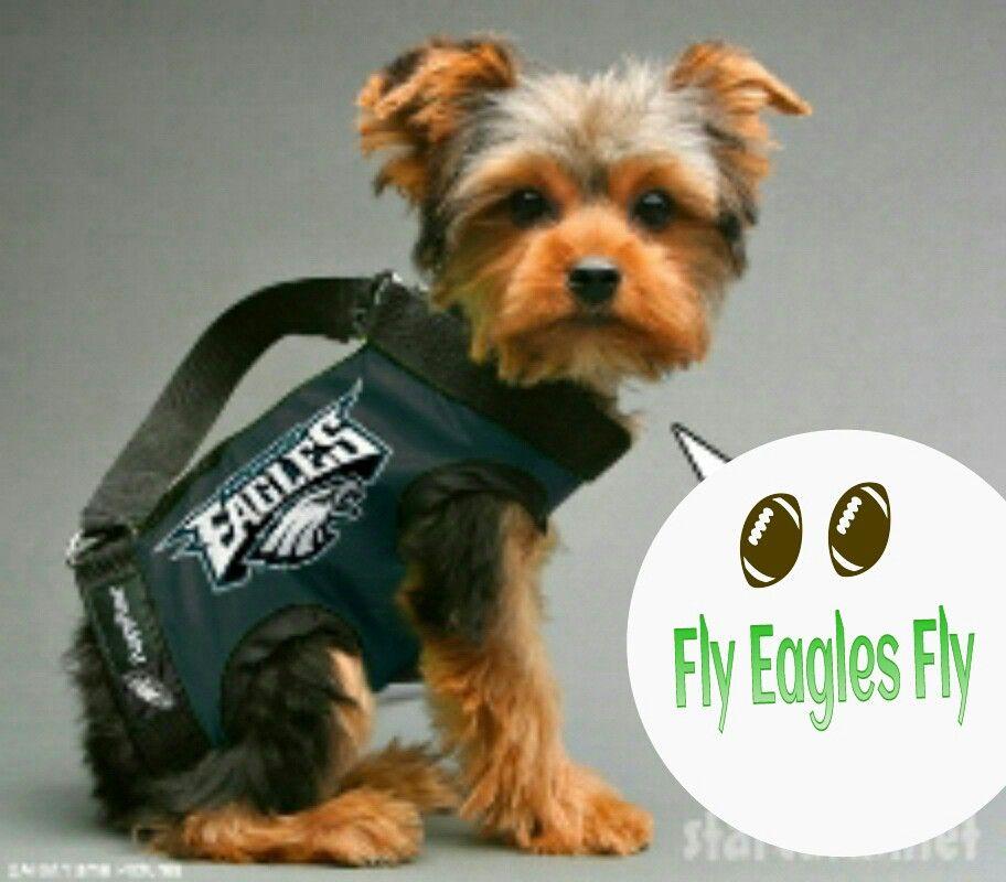 low cost a4c3b d9b3b FLY EAGLES FLY YORKIE | NFL - Philadelphia Eagles ...