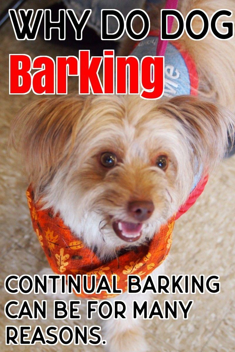 Why Dogs Barking Dog Barking Dog Barking Dogs Stop Dog Barking