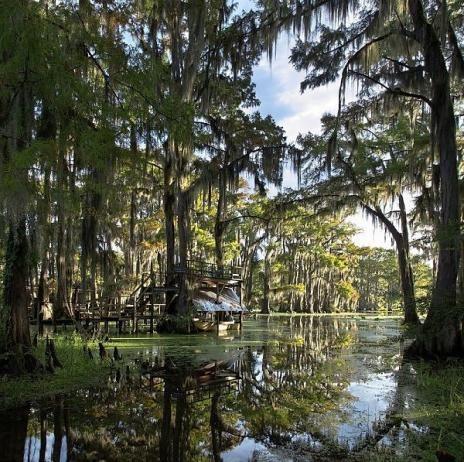アメリカ、テキサス州 Caddo湖