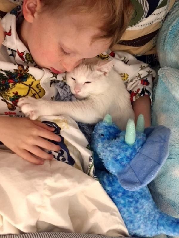 Cat Who Lost Her Own Babies Finds Someone To Love And Care For