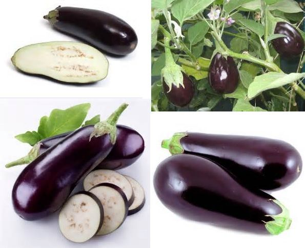 #Fruit #Eggplant - Eggplant is not a vegetable, it is a fruit, more specifically a berry from the nightshade family and is related to the tomato, sweet pepper and potato. Plant after all danger of frost is passed. Seeds are typically started indoors, eight to ten weeks prior to the anticipated frost-free date. Spacing should be 45 cm (18 in) to 60 cm (24 in) between plants and 60 to 90 cm (24 to 36 in) between rows.