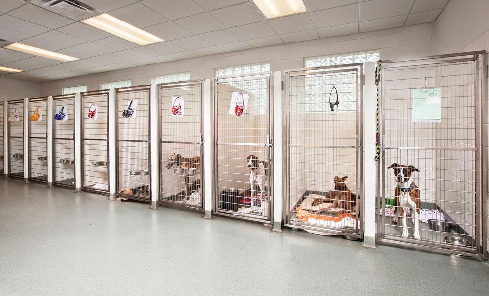 Kennel Hospital Design Veterinary Hospital Pinterest