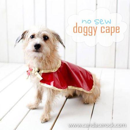 DIY No Sew Dog Accessories - The Cottage Market