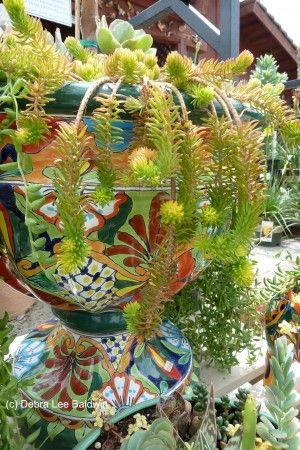 Plant World Nursery Escondido Ca Photo Copyright Debra Lee Baldwin Gardening Gone Wild