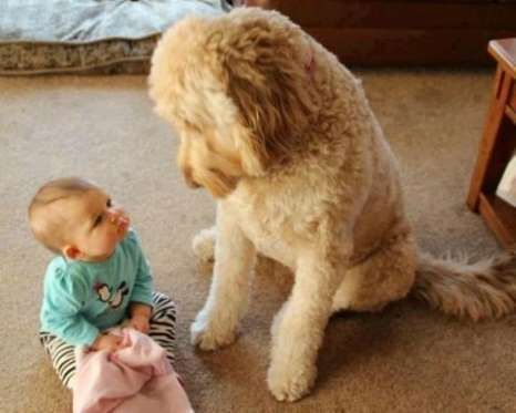 13 pets babysitting their favorite tiny humans dog animal and fur