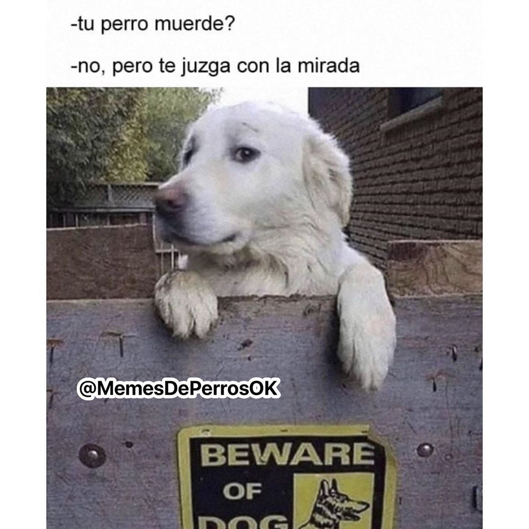 319 Me Gusta 1 Comentarios Memes De Perros Memesdeperrosok En Instagram Seguinos Memesdeperrosok Lo Memes Comicos Memes Divertidos Memes Sarcasticos