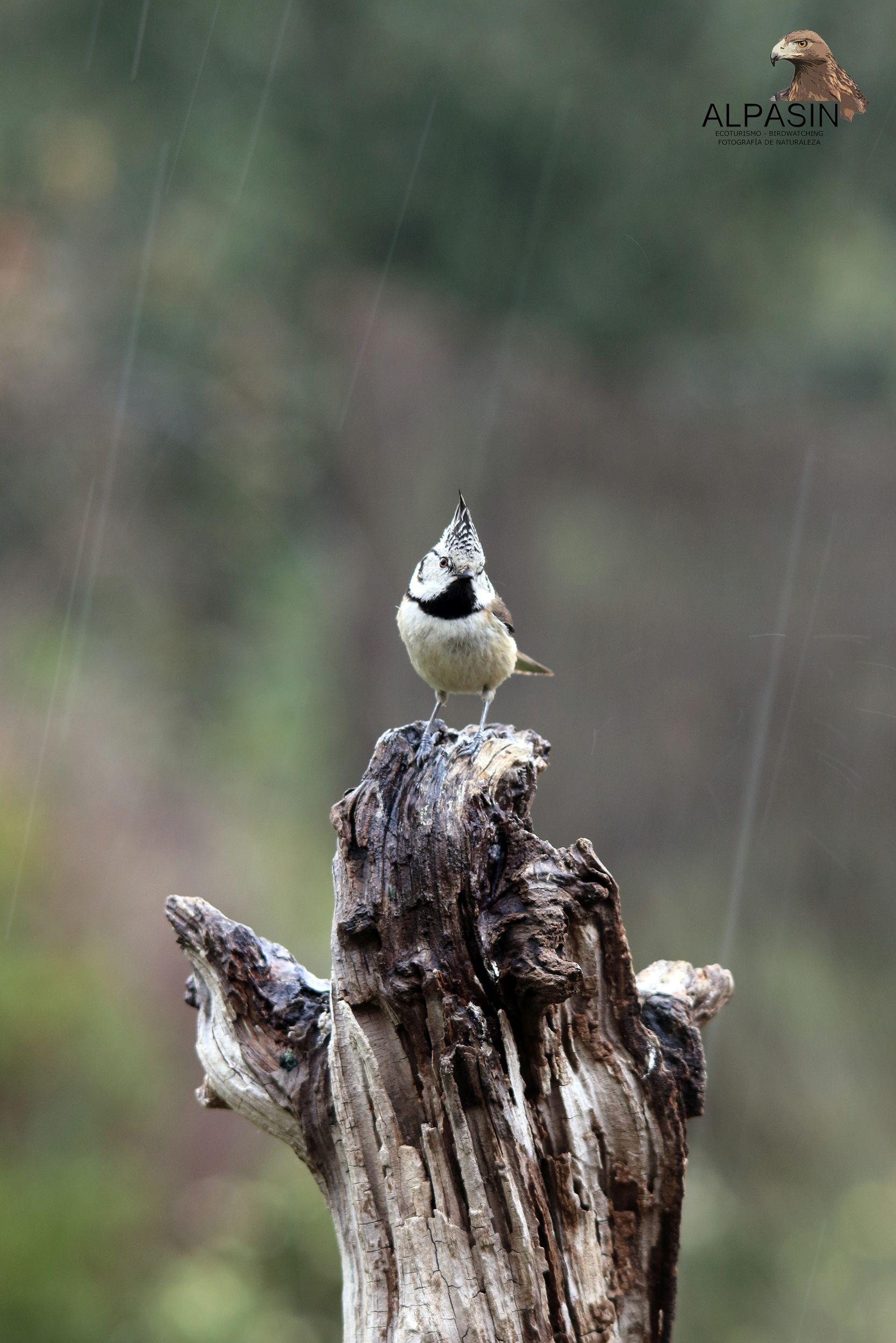 Difrutando cada gota de la primavera, en el corazón de Sierra Morena.