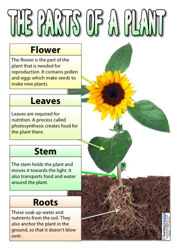 The Plants Pack Resources For Teachers And Educators Teaching Plants Plant Science Plant Activities