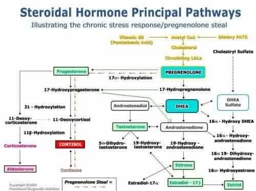 Steroid hormone pathway chart dragon ear cuff gold