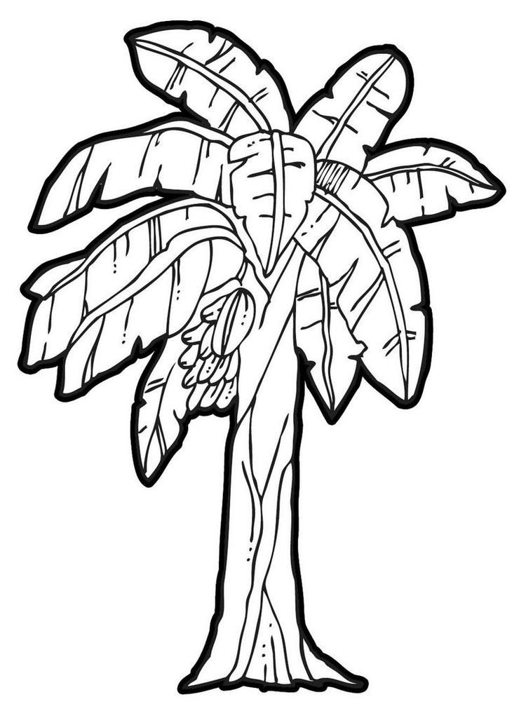 Banana Tree Coloring Page Printable Fruit Coloring Pages Tree