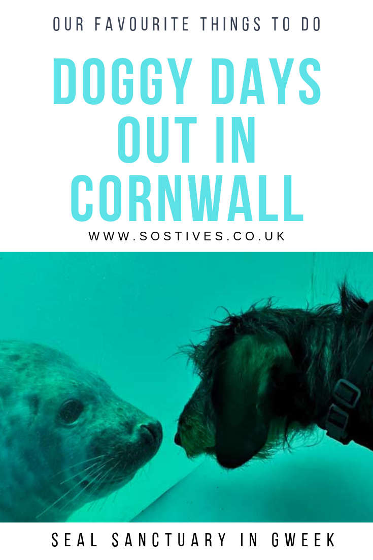 Best Dog Friendly Days Out In Cornwall There Are Many Things You Can Enjoy With Your Dog In The St Ives Area And Aro Cornwall Dog Friendly Holidays In 2019