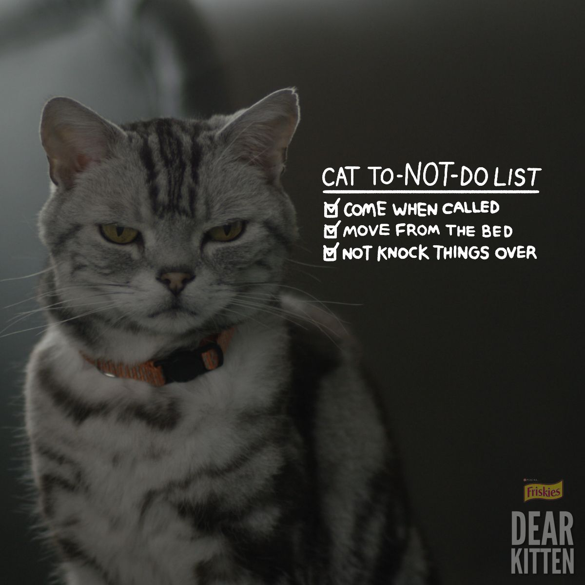 Human To Do List Watch The New Dear Kitten Going Live Tomorrow Cats Cats And Kittens Funny Cats
