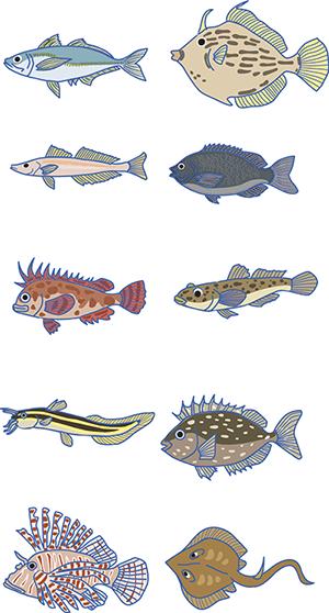 唐津釣りキャンペーンイラスト 魚イラスト イラスト 釣り