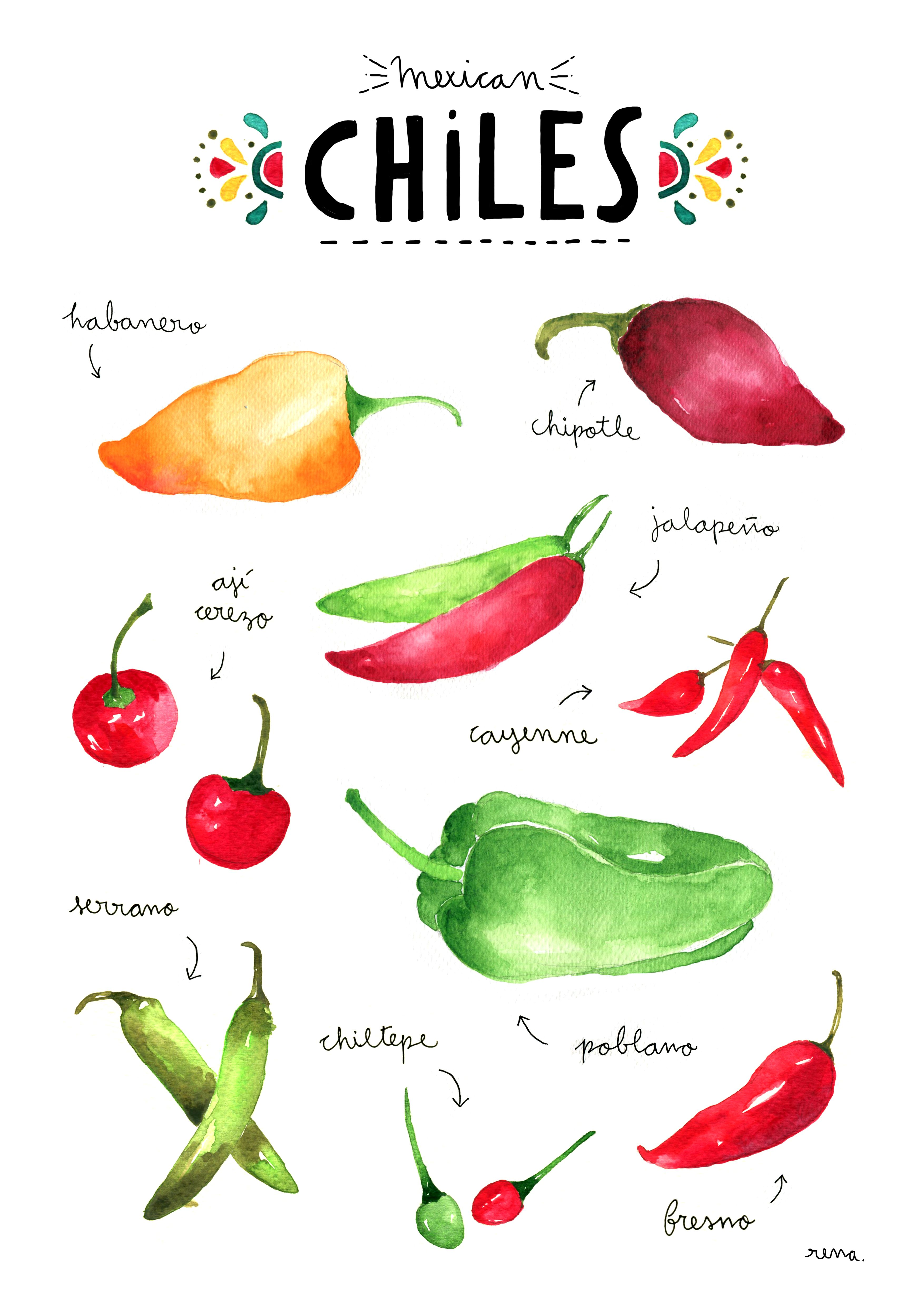 My Favourite Mexican Chillies Illustration By Rena Ortega Chile Mexicano Comida Mexicana Tradicional Tipos De Chiles